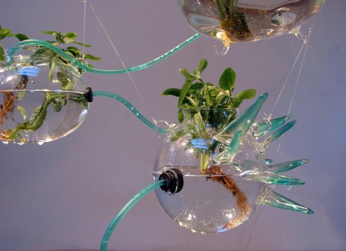 04-closeup-herbs2