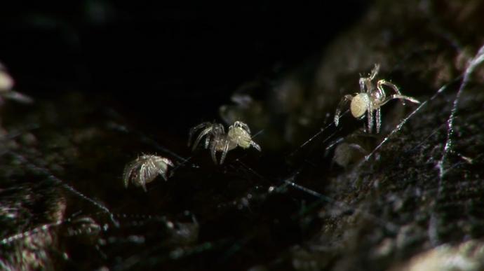 Spider Haus Movies by Ken Rinaldo 2015
