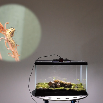 Opera For Dying Insects